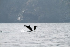 Jumping of Mediterranean bottlenose dolphins in front of the coast photographed by Serge Briez, ©2014 Cap médiations