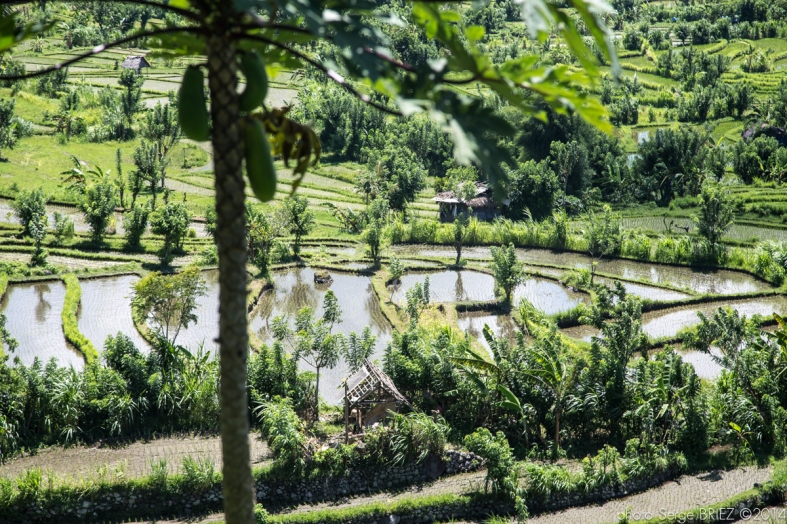 Bali's crops photographed by Serge Briez