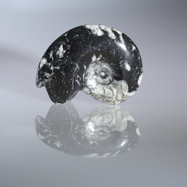Goniatite, Fossil photographed by Serge Briez for Imagin'all (http://www.cristaux-sante.com)