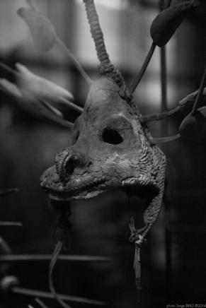 zoomorphic mask, Primitive art,in museum quai Branly photographed by Serge Briez, ©2014 Cap médiations