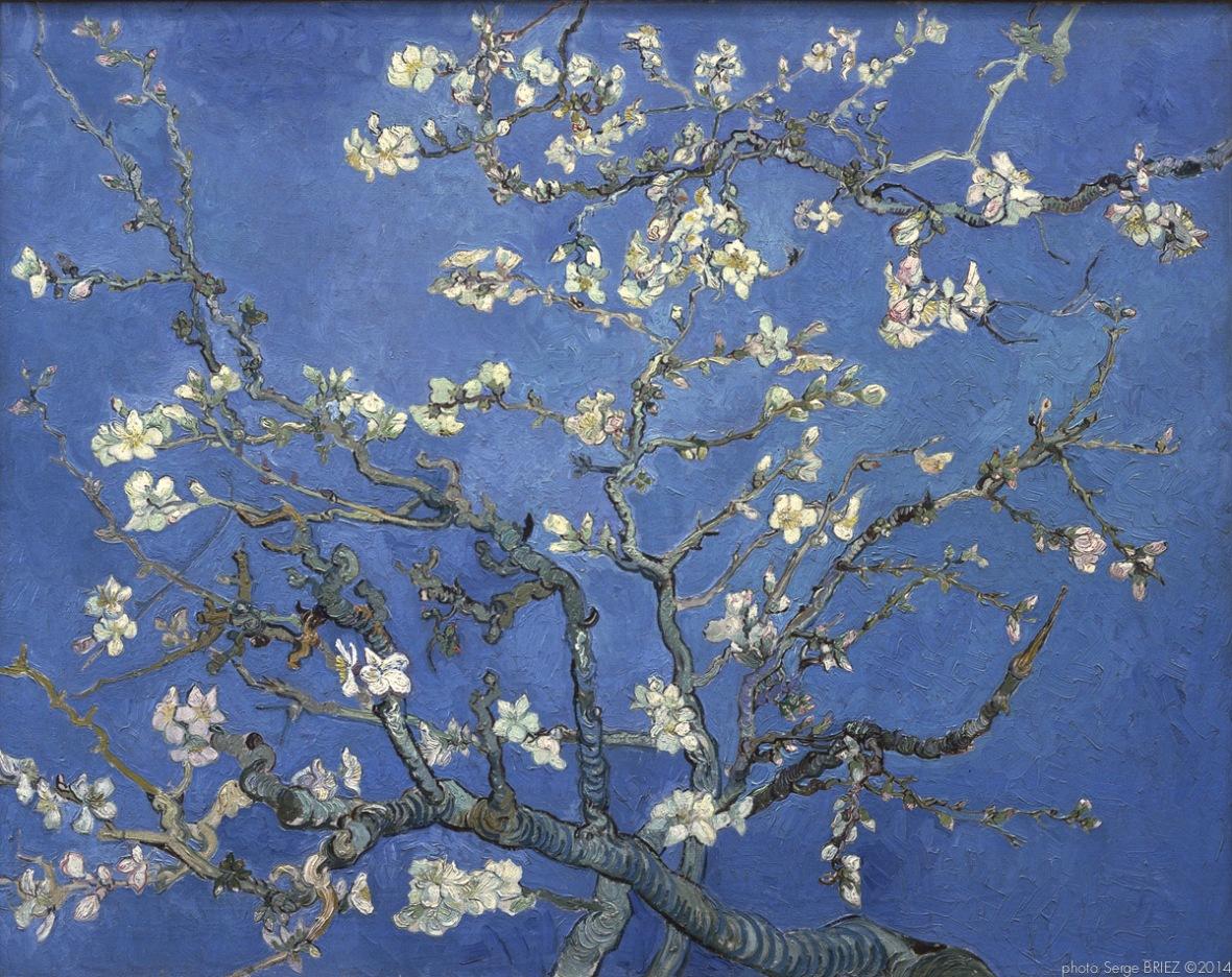 Almond Blossom Auvers sur Oise, Branches d'amandier en fleurs, Auvers-sur-Oise, février 1890, Van gogh's painting photographed by Serge Briez, ©2014 Cap médiations