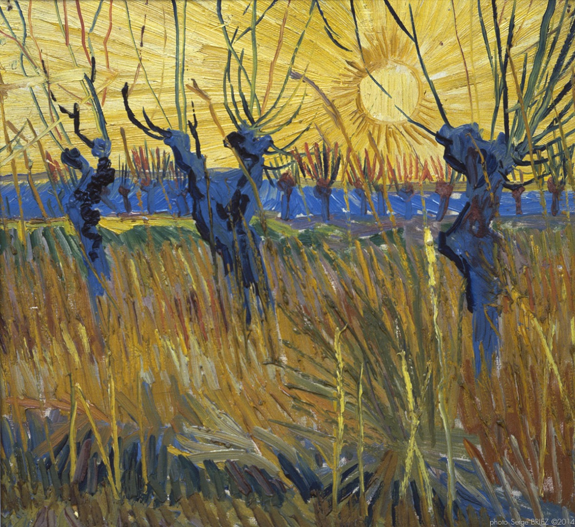 willows at sunset, Saules au soleil couchant, 1888, Van gogh's painting photographed by Serge Briez, ©2014 Cap médiations
