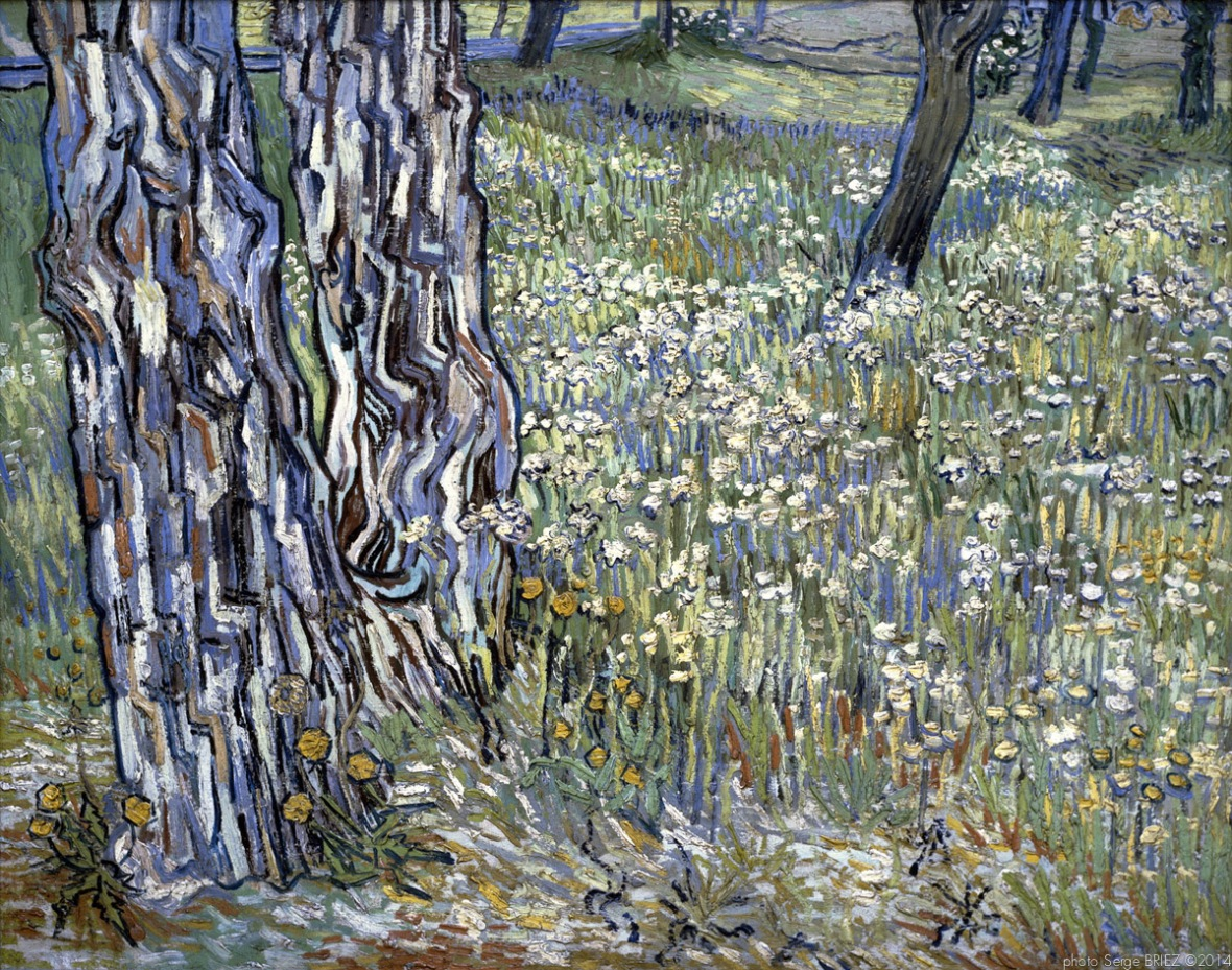 Pine Trees and Dandelions in the Garden of Saint-Paul Hospital, pins et pissenlits dans le par de l'hospital Saint paul, 1890 , Van gogh's painting photographed by Serge Briez, ©2014 Cap médiations