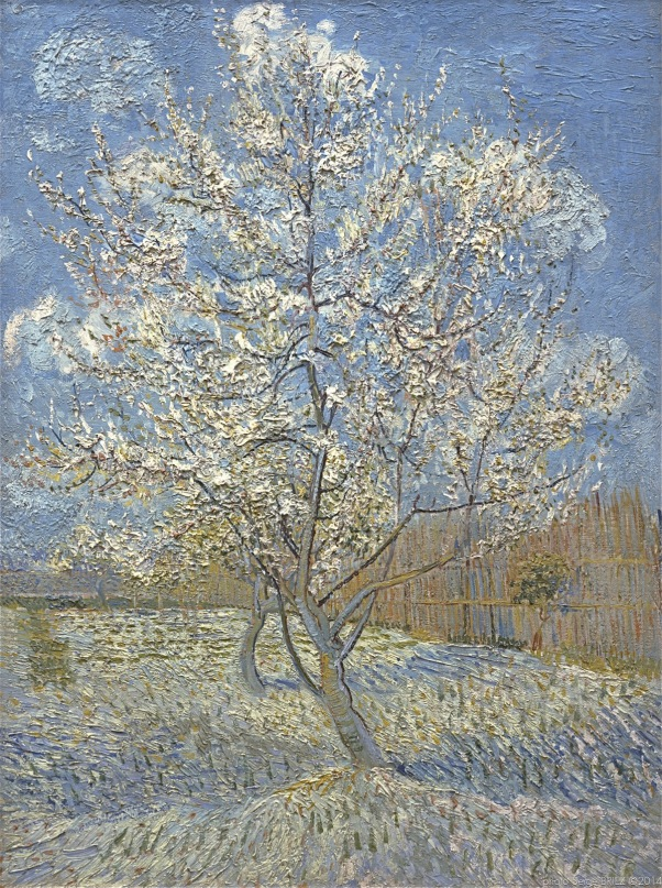 Pink Peach Tree in Blossom, le pêcher rose, Arles 1888, Van gogh's painting photographed by Serge Briez, ©2014 Cap médiations