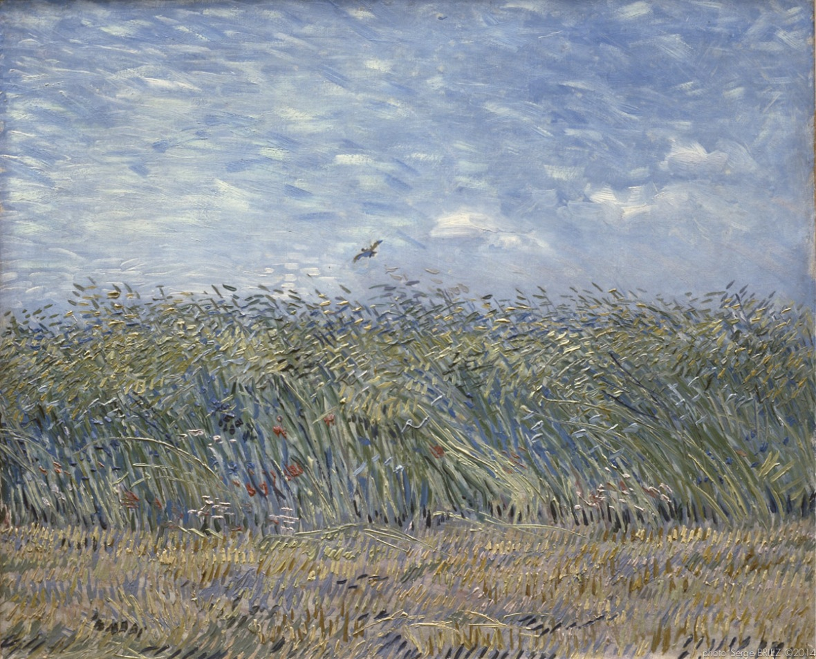 Wheat fields with larks, Champs de blé avec des alouettes, 1888, Van gogh's painting photographed by Serge Briez, ©2014 Cap médiations