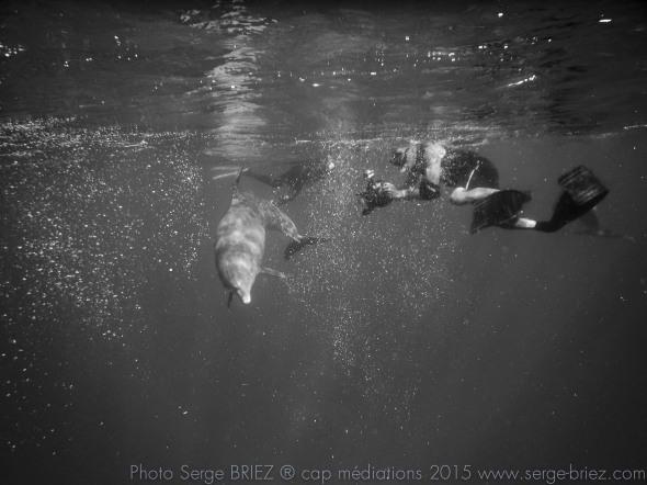 dauphin en Mer Rouge, Tursiops adunctus, photo Serge Briez®capmediations2015