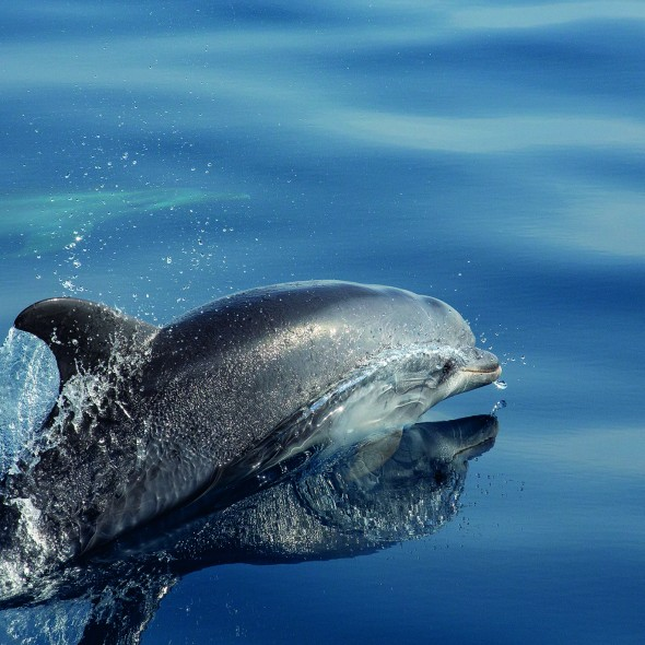 le maître des océans